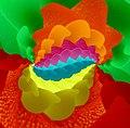 Windflower-05237-nevit droste.jpg