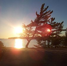 Windswept pine on Georgian Bay.jpg