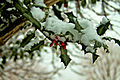 Winter holly on a snowy London day.jpeg