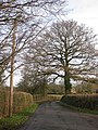 Winter trees - geograph.org.uk - 1619126.jpg