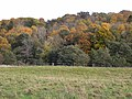 Wooley Wood - geograph.org.uk - 1556170.jpg