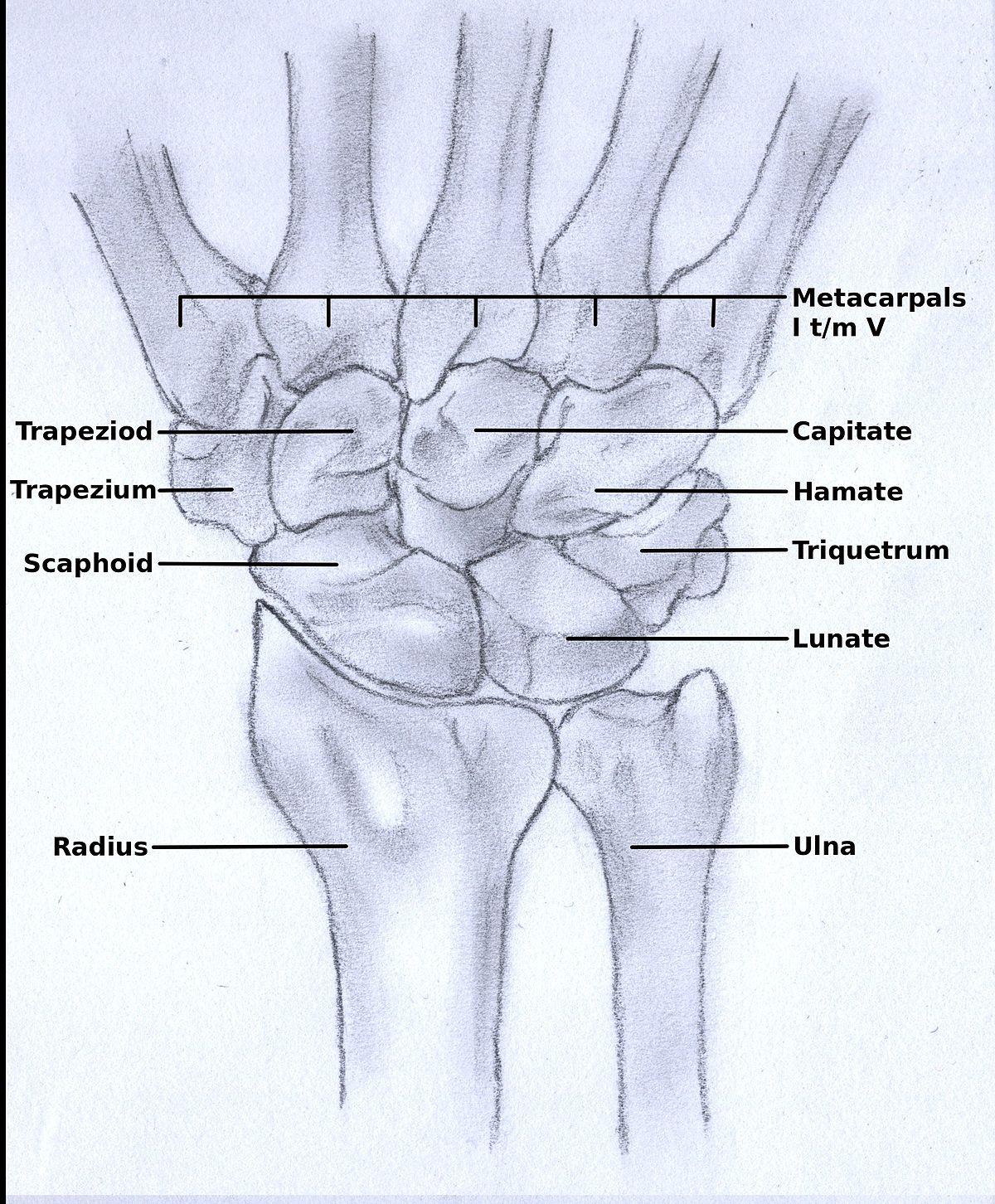 Upper Limb Orthotics/Rheumatoid Arthritis , Wikiversity