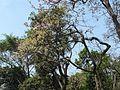 Yerul (Marathi- येरुळ) (3392595606).jpg