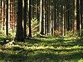 Zeller Wald-GO15.jpg