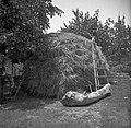 """""""P?rnat"""" s škalonom (vel. lestev) in škalo (mala lestev), Bernetiči 1950.jpg"""