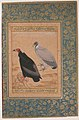 """Red-Headed Vulture and Long-Billed Vulture"", Folio from the Shah Jahan Album MET sf55-121-10-12a.jpg"