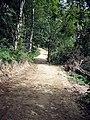 """Red Squirrel Walk"" - geograph.org.uk - 1478246.jpg"