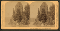 'Rooster Rock', curious rock formation along the Columbia River, Oregon, from Robert N. Dennis collection of stereoscopic views.png