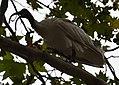 (1)Ibis Sydney 036.jpg