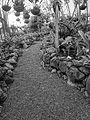 (Jardín Botánico de Quito) a black and white photo, pic a1b.JPG