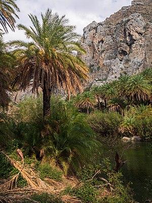 Preveli palm forest