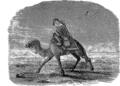 Верблюд 3 (БЭАН).png