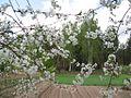 Весенний огород - panoramio.jpg