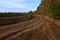 Дорога вдоль березовой посадки - panoramio.jpg