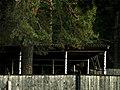Забор и сторожка Музея, там живут сторож и собаки - panoramio.jpg