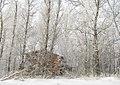 Зима полным ходом - panoramio.jpg