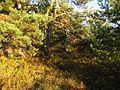 Золотая осень - panoramio (14).jpg