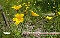 Лен желтый Альбом KR 01.jpg