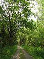 Лесная дорожка meža ceļš - panoramio (10).jpg