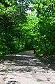 Парк Березовий гай по вулиці Вишгородській у Києві. Фото 5.jpg