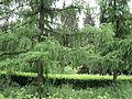 Парк шума Гази Баба во мај (129).JPG