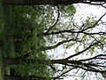 Парк шума Гази Баба во мај (134).JPG