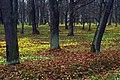 Петергоф Парк Александрия Ноябрь.jpg