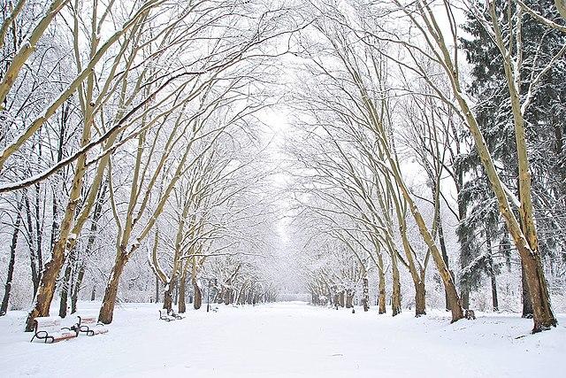 Платанова алея Стрийський парк.jpg