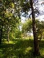 Прилуцький дендропарк Прилуцький район, м. Прилуки, вул. Вавилова, 16 74-107-500 06.jpg