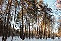 Пуща-Водицький лісопарк 24.JPG