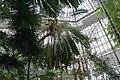Растения в Пальмовой оранжерее.jpg