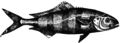 Рыба-лоцман БСЭ1.png
