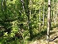 Р Волчья - panoramio.jpg