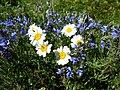 Цветы на холме горы Шелудивой.jpg