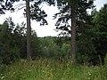 Центральный ботанический сад (23.07.2007) - panoramio - sergfokin (5).jpg
