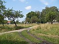 Яблоневый сад - panoramio (10).jpg