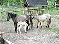 Яворівський національний природний парк-4.JPG