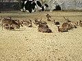বন্যপ্রাণী অভয়ারণ্য.jpg