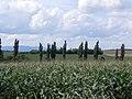 コーンとポプラ(Corn and poplar) - panoramio.jpg