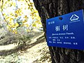 中科院植物园植物标识牌(2014年11月).jpg