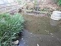 大窪神社の小さな池 - panoramio.jpg