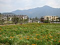 孔源花海 - Flowers in Kongyuan Village - 2016.03 - panoramio.jpg
