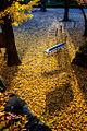 斜陽とベンチ Spotlit Bench (8204872801).jpg