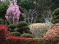 桃、ミツマタ - panoramio.jpg