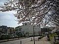 横山公園 - panoramio - hasano jp.jpg