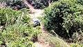 虎门皇帝山20130519 - panoramio (3).jpg
