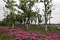 衢州服务区旁边的树林 - panoramio (3).jpg