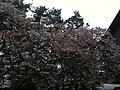 香川県善通寺市善通寺 - panoramio (7).jpg