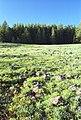 02-14-15, field - panoramio.jpg