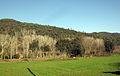 082 Vall de la riera d'Arbúcies, vora Can Gall.jpg
